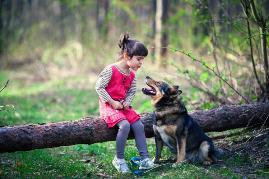 therapy dog, trauma, children and trauma, mental health, well-being, counselling, traumatic