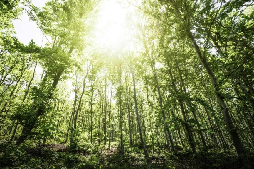 forest bath, exercise, mental health, well-being, personal development
