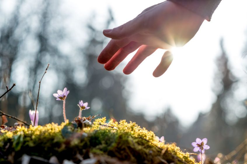 hand of a man above a mossy rock with new delicate blue flower back lit by the sun. concept of human caring